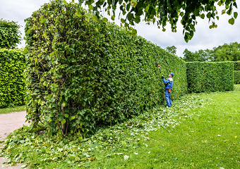 10 Best Long Reach Hedge Trimmers in 2019