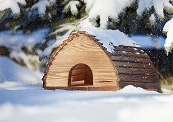 10 Best Hedgehog Houses in 2019