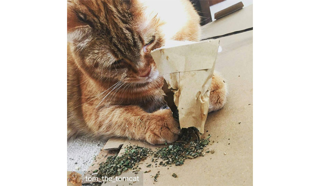 Cat FurNature Extra Strong Catnip