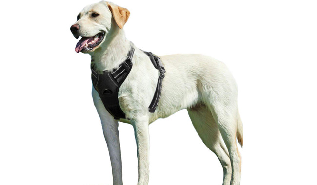 Eagloo No Pull Dog Harness
