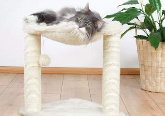 10 Best Cat Scratching Posts in 2020