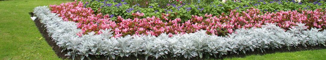 5 Best Garden Services in Worthing Banner Image