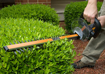 How to Cut Hedges