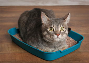 How Often To Change Cat Litter