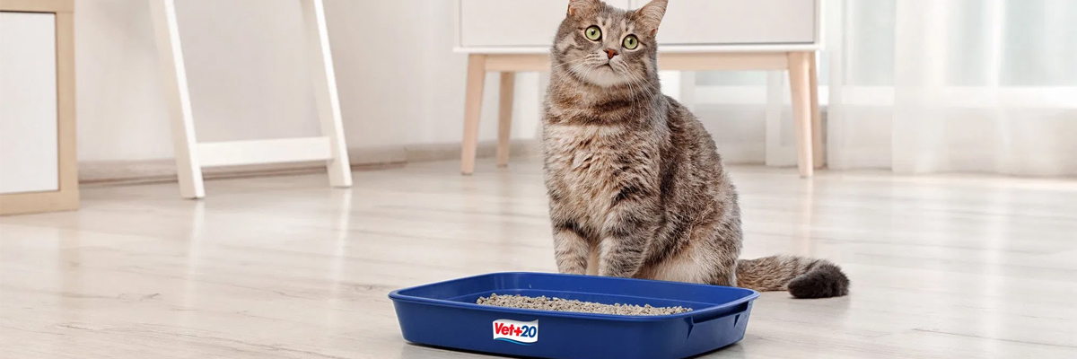 What Is The Best Cat Litter Image 1